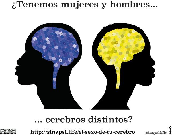 mosaico funciones del cerebro perfil