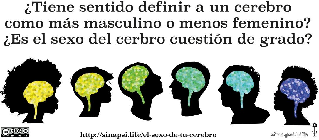 EL SEXO DE TU CEREBRO – sinapsi